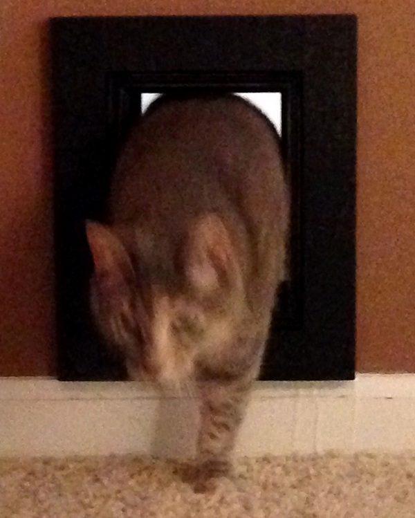 5-cat-door-katy-success