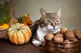 A cat with fall Thanksgiving decor, gourds.