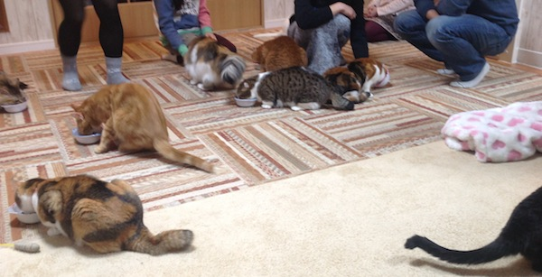 Cat feeding time