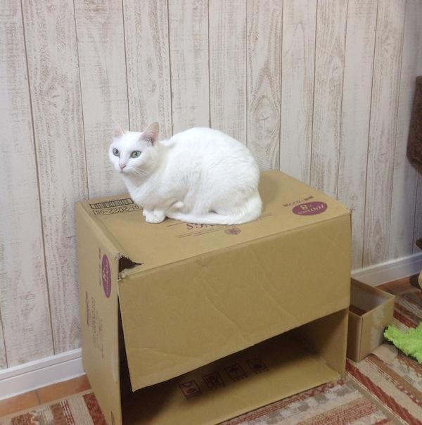 Fuu on box