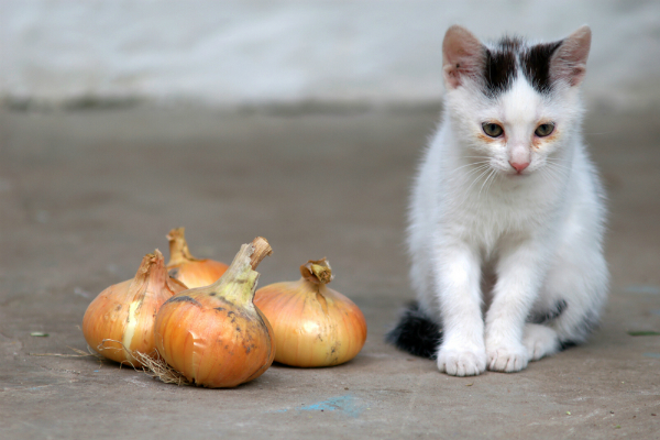 People Foods You Shouldn T Give Cat