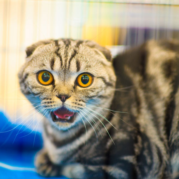 What Causes Epileptic Seizures in Cats? - Catster