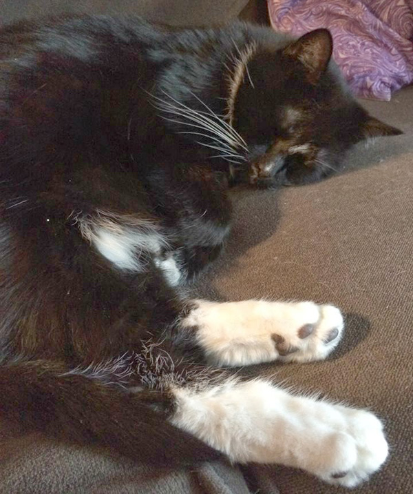 9 Reasons Why I Love My Cats\' Legs and Paws - Catster