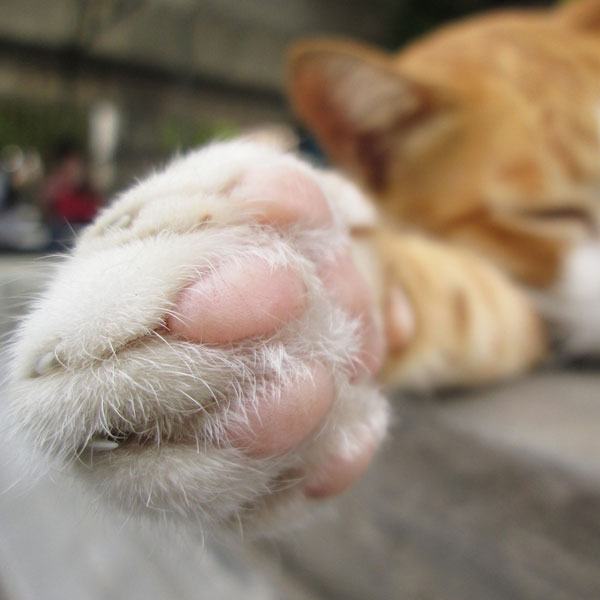 Are Your Cat's Feet Producing an Unusual Odor? - Catster