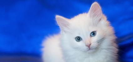 White cats photos — 1