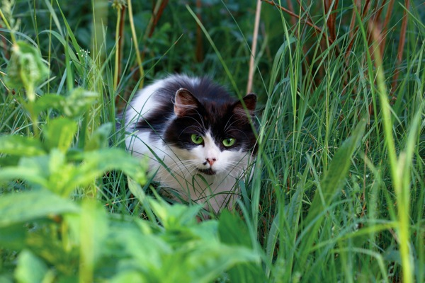 Lyme Disease In Cats Sometimes The Vets Are Wrong Catster