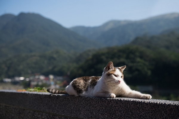 Does the World Welcome Cute Cat Stories More These Days?
