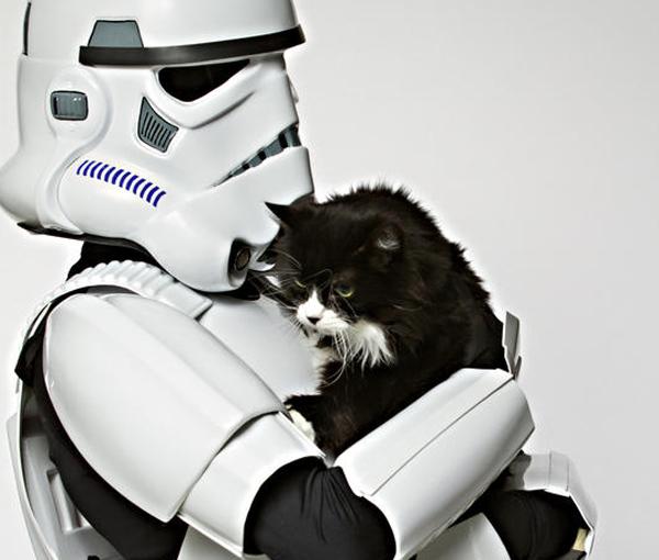 cutest cat breed