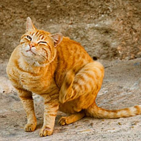 Cat Flea And Tick Treatment Options Catster