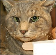 DNA Evidence Used to Convict Cat Torturer