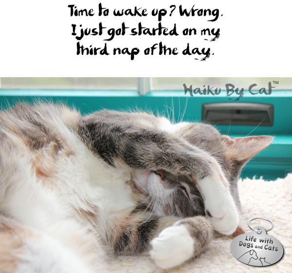 1-Haiku by Cat Dawn third nap National Haiku Poetry Day