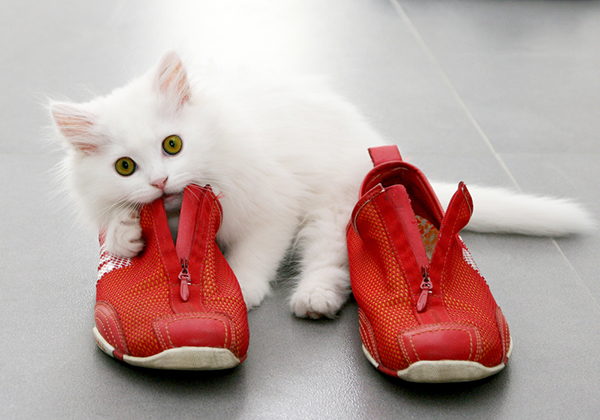 1-cat-running-shoes