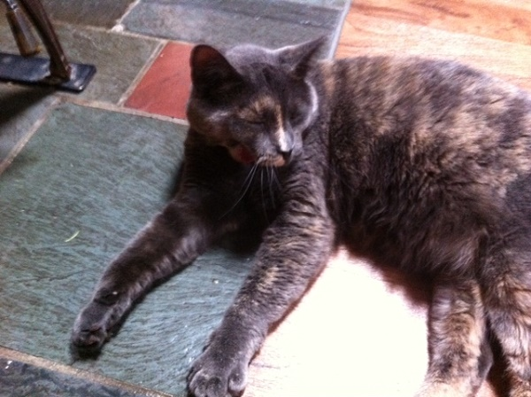 Jamie BlueBell is a long-legged, sweet girl with a sense of humor.