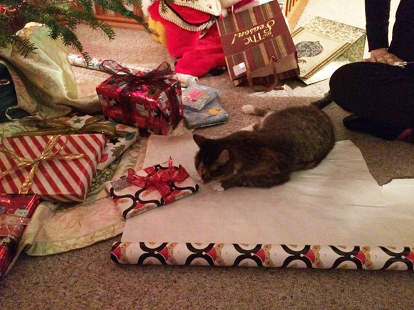 its impossible to efficiently wrap anything while a crowd of cats is helping me and to top it off all my gifts have clumps of cat hair stuck in the - How To Wrap A Cat For Christmas