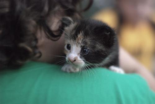 Kitten on a Shoulder