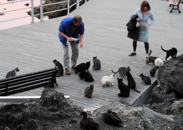 15-harbour kitties puerto del carmen