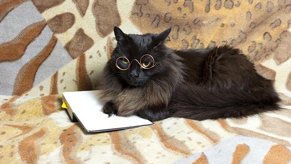 2-cat-scientist