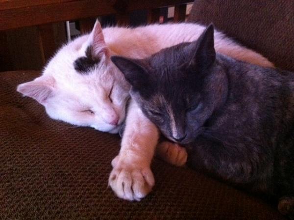 Snuggling with her favorite buddy, Kieran.