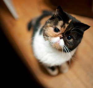 20121007-cat-pudge-photo-2.jpg