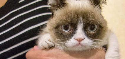 Have Yourself a Grumpy Little Christmas (Card) - Catster Tardar Sauce