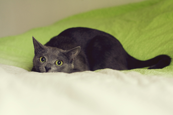 6 Reasons Why Your Cat Wakes You Up At Night Catster