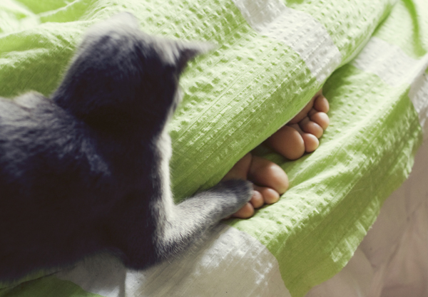 A cat playing with his human's feet in bed.