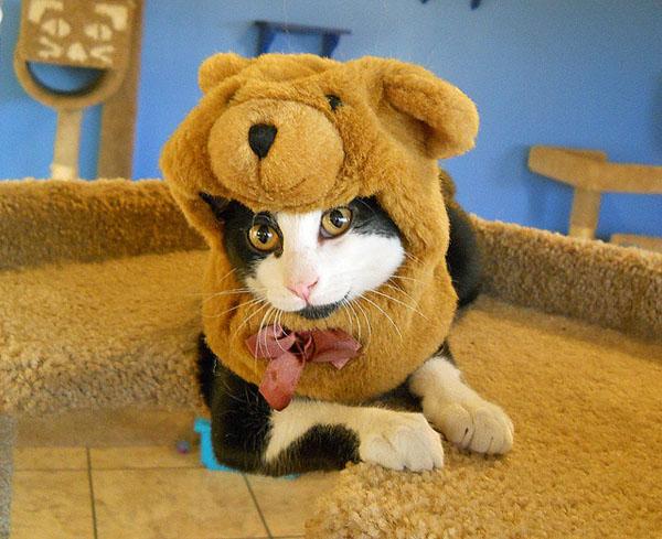 Cat In The Hat Dog Costume