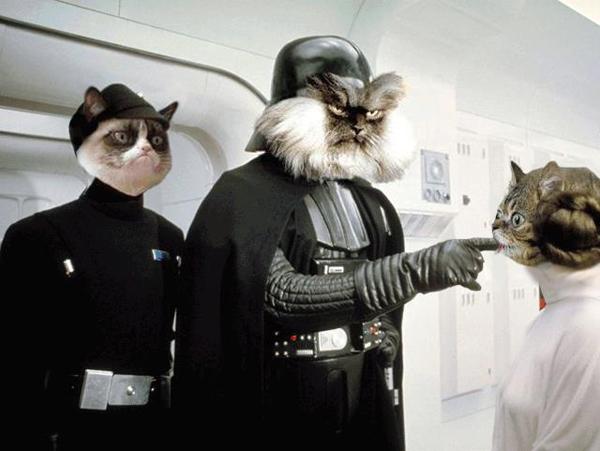 Liz Is The Cat S Meow