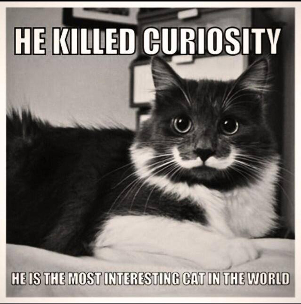 Handlebar Mustache Meme: Is Hamilton The Cat The Most Authentic Hipster Ever?