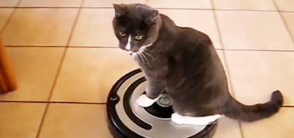 See 6 Cats React to the Roomba & See 6 Cats React to the Roomba - Catster