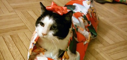 DIY Video: How to Gift Wrap a Cat for the Holidays - Catster