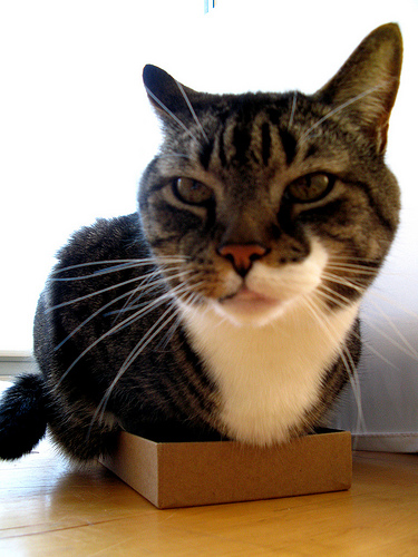 no box too small
