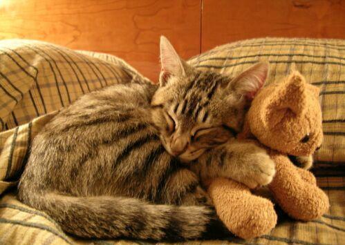 Neko and teddy