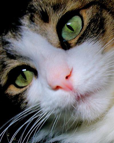 Hobo sticks her pink nose into the camera _0236