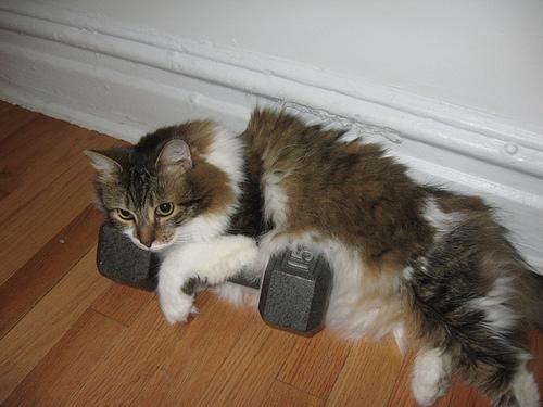Stella Weightlifting