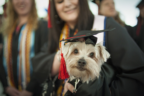 A dog attends the commencement ceremony at Washington and Jefferson College.
