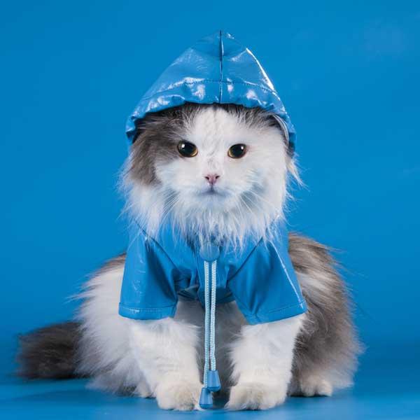 3-cat-raincoat
