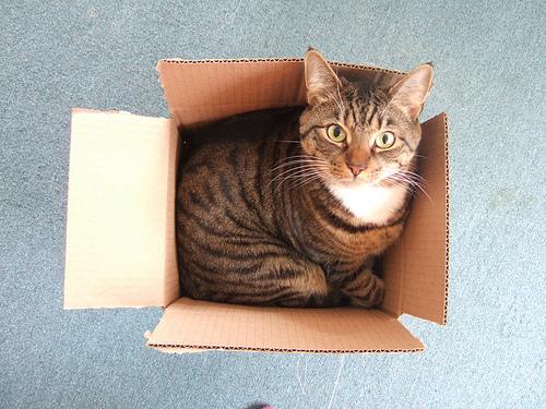 Large cat, small box