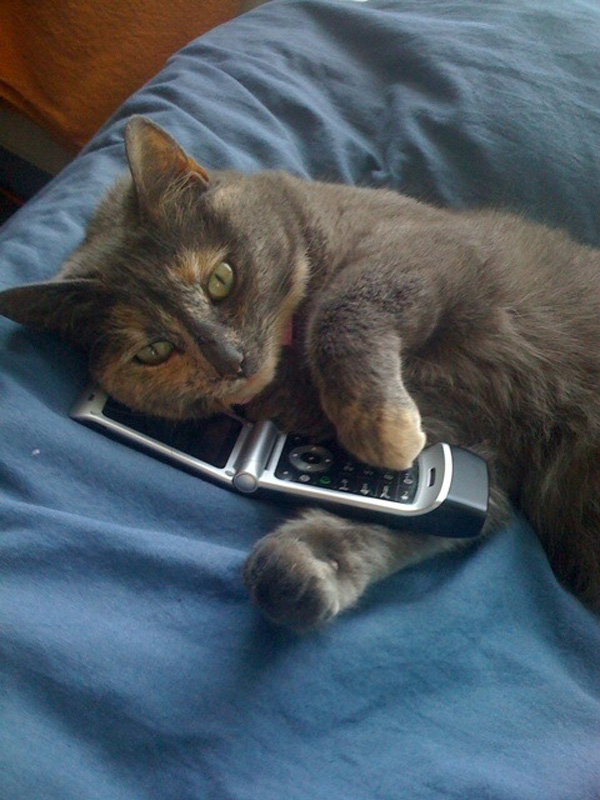 7 Voicemails Only Cats Would Leave You Catster