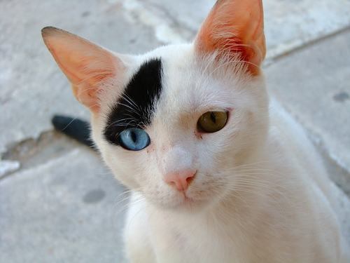 Two-Color Cat