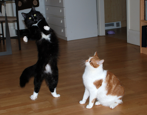 Dances with cats