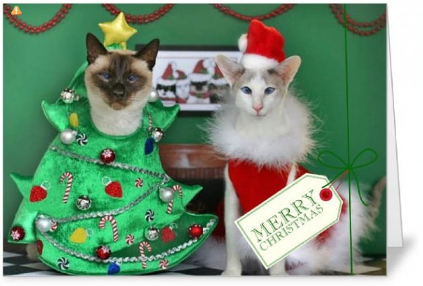 Creating Cat Christmas Cards Selecting a Printing Service