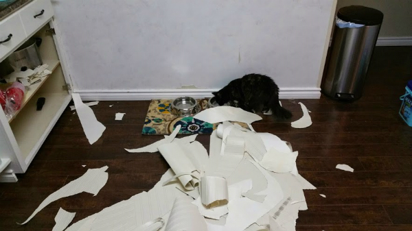 The aftermath of our wallpaper pulling party. Poor Speck had to move paper to get to her water.