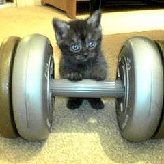 weightlifting cat