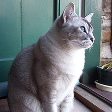 Why Do Seemingly Healthy Old Cats Suddenly Get Sick and Die? - Catster