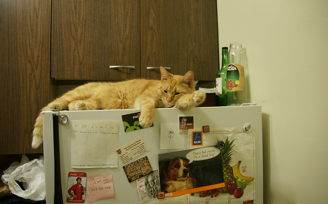 How Long Can I Keep Open Cat Food In Fridge