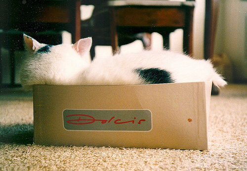 Cat asleep in a really small box