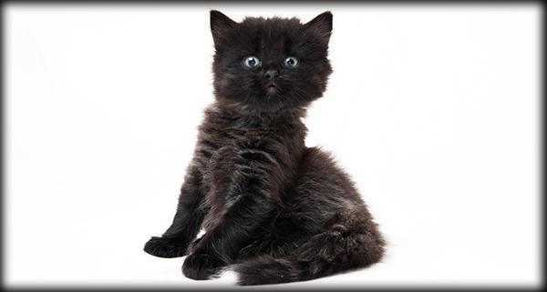 5-adopt-black-kitten-02