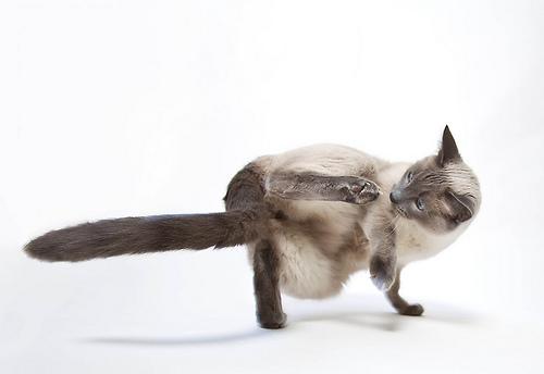 Break Dance Kitty
