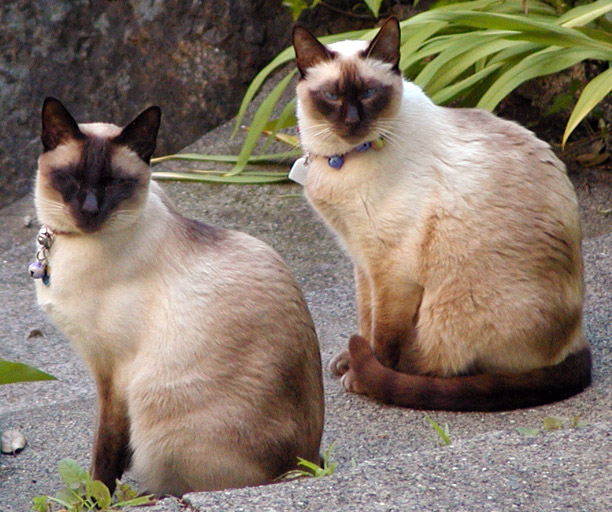 Seven Garbage Bags Of Dead Siamese Cats Dumped In Texas